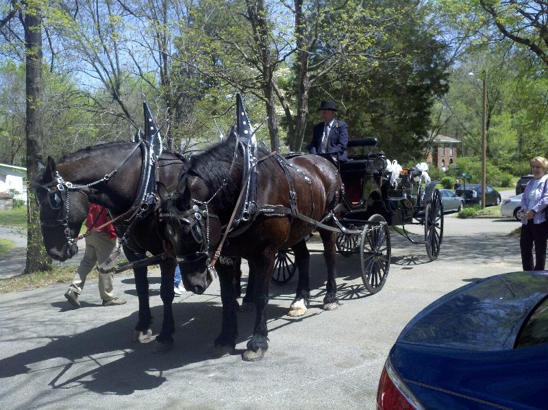 horse-drawn-carriage-magnolias